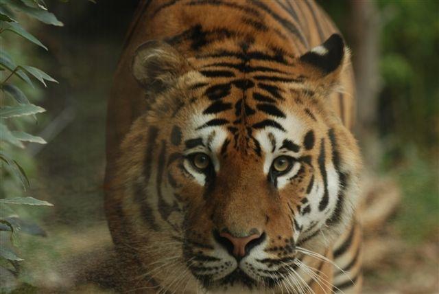 Parco zoo falconara i parchi di - Immagini di animali dello zoo per bambini ...